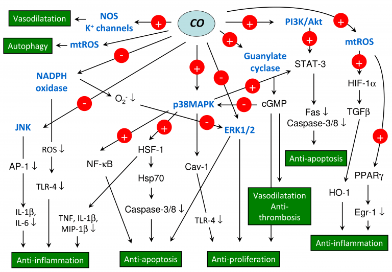 Signaling pathways mediated by carbon monoxide (CO).